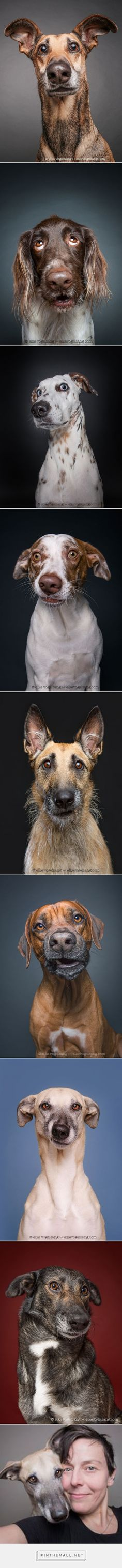 Dogs Questioning The Photographer's Sanity | Bored Panda...