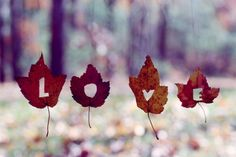 #love #autumn #leaves