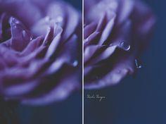 . #gorgeous Twilight | Midnight by onixa on deviantART