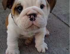 Cant help it, I love this puppy.