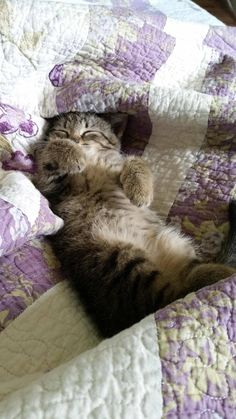 Things that make you go AWW! Like puppies, bunnies, babies, and so on. A place for really cute pictures and videos! Animals And Pets, Baby Animals, Cute Animals, Crazy Cat Lady, Crazy Cats, I Love Cats, Cool Cats, Cat Aesthetic, Pretty Cats