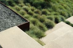 I like the softened effect of drought tolerant grass clumps gathered around the…