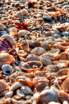 Conchas do mar Ocean Beach, Beach Day, Whatsapp Wallpaper, I Love The Beach, Ocean Life, Sea Creatures, Under The Sea, Strand, Sea Shells