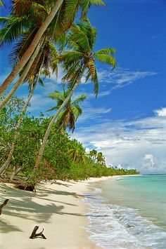 Where I go when I close my eyes: Palmtrees swaying over a beach at Uoleva, Tonga by LimeWave Photo, via Flickr.