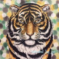 My Tiger Imagimorphia Kerby Rosanes ✏️Faber Castell Polychromos, winsorandnewton ink & soft pastels 15/6/16