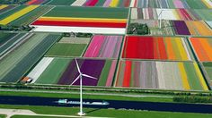 Most Dazzling Colors Created by Tulips