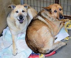 Bonded dogs in California scheduled to die Wednesday