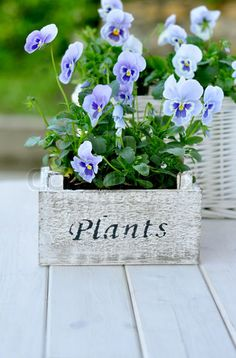 pansies #garden #outdoors. I hate gardening, but I wouldn't mind some pansies outside (R.I.P Nana).
