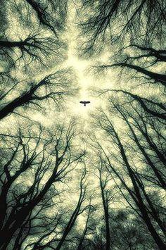 Eagle fly alone