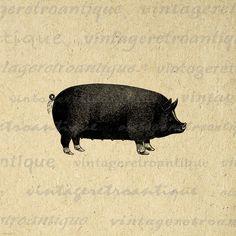 Big Pig Digital Image Download Printable Graphic Vintage Clip Art High Quality for Transfers Printing etc HQ 300dpi  No.645. $3.50, via Etsy.