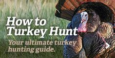 15-Yard Files: Gobblers Destroy Jake Decoy, Steal its Head  #turkeyhunting #howto