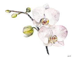 Original peinture aquarelle orchidée de la par TheColorfulCatStudio
