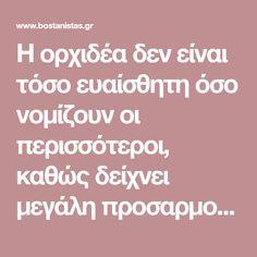 Η ορχιδέα δεν είναι τόσο ευαίσθητη όσο νομίζουν οι περισσότεροι, καθώς δείχνει μεγάλη προσαρμοστικότητα στις ελληνικές συνθήκες. Αρκεί βέβαια να της δώσουμε μια σχετική φροντίδα - ακολουθήστε, λοιπόν, τις παρακάτω συμβουλές.