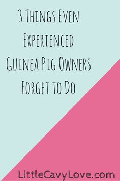 The top three things that I have found even experienced guinea pig owners sometimes forget to do!