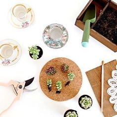 DIY Suculentas para bodas // Wedding suculents