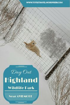 Family day out at the Highland Wildlife Park, near Aviemore, Scotland