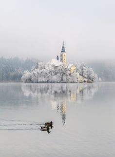Winter - Bled Castle, Lake Bled, Slovenia. More on Slovenia at The Culture Trip.com