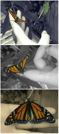 Beautiful butterfly sitting comfortably while I take pictures of it!