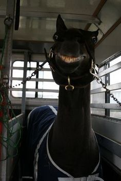 a giggle for the monday blues! Gets better the longer you look at it #laugh #monday #horse #smile #equine #humour #love #motivation #let'sride