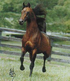 El Ghazi, Arabian Stallion (Aloes x Elektra)