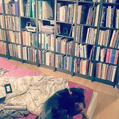 New bookshelves even make an overweight puppy look tiny  #shelfie #books #library #bookshelf