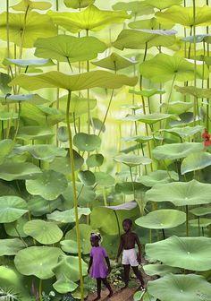 Niños en el bosque de helechos de Jamaica Fotógrafo Ruud van Empel