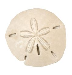 Sand dollar.... and I have a story with this.