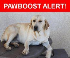 Please spread the word! Roxy was last seen in Palmdale, CA 93551.    Nearest Address: 25th Street West, Palmdale, CA, United States