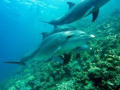 10 curiosidades sobre los delfines. Los delfines son de las criaturas del reino animal más populares, carismáticas e inteligentes. Con esa expresión que parece que siempre estén sonriendo, son un...