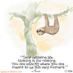 Yogi Sloth