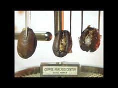 coffee roasting technique by coffee analysis center in korea