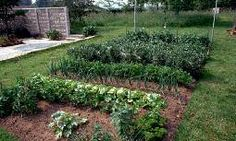 Beautiful garden.  Strategies for the Small Vegetable Garden | Garden Guides