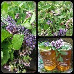 Levandulovo - meduňkovo - dobromyslový sirup Bylinkové zahrádky jsou v plném květu, včelky pilně sbírají pyl, vzduch sladce voní.... Co s úrodou, kterou sklízíme 3x do roka? Vyzkoušejte sirup neboli bylinkovou šťávu. Postup: Nasbírejte si stejné díly čerstvé meduňky, dobromysle /nebo mateřídoušky/ a poloviční díl levandule. Meduňku a dobromysl pokrájejte cca na 1-2cm kousíčky, levandulové… Natural Medicine, Parsley, Halloween Makeup, Korn, Spices, Herbs, Smoothie, Drinks, Health