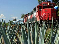 Tequila Express, otra excelente opción para semana santa. #TequilaOmega