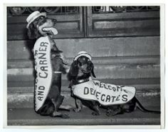 """hspdigitallibrary:  """"'Max' and 'Zepp,' delegates 'at length' to the Democratic National  Convention, show their tricks to new arrivals as they travel with the  Welcoming Committee."""" A bit of cuteness from the 1939 national democratic convention, 1936. This image is from the Philadelphia Record photograph morgue."""
