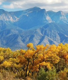 A long-lens detail showing the Sandias in the background, the cottonwoods in full fall splendor, along the Rio Grande a little north of Albuquerque.