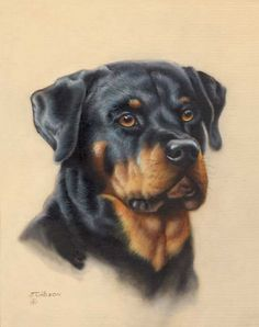 The Funny Rottweiler Puppy Pictures - Always Pawsome Animal Paintings, Animal Drawings, Rottweiler Dog, Color Pencil Art, Mundo Animal, Puppy Pictures, Dog Photos, Dog Portraits, Dog Gifts