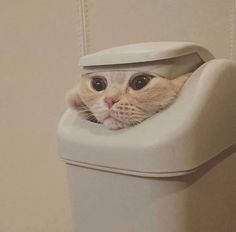 Epic Game of Thrones Scene Immortalized By Cat Memes! - World's largest collection of cat memes and other animals Funny Animal Pictures, Cute Funny Animals, Cute Baby Animals, Funny Cute, Animals And Pets, Funny Photos, Humorous Animals, Cute Cats Photos, Fluffy Animals