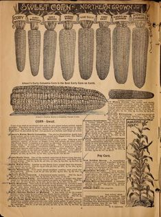 Alneer Brothers seed and plant catalogue for 1898 : Alneer Brothers : Free Download, Borrow, and Streaming : Internet Archive Plant Catalogs, The Borrowers, Brother, Seeds, Archive, Internet, Cover, Illustration, Plants