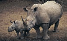 Approximately 240 acres of wildlife habitat are being destroyed per hour in the world. - African Conservancy