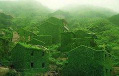 Dans l'île de Goqui, un village déserté est désormais complètement recouvert par la verdure. © Tang Yuhong
