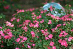 Try Impatiens in Shady Spots --> http://www.hgtvgardens.com/flowering-plants/impatiens-is-a-virtue?soc=pinterest
