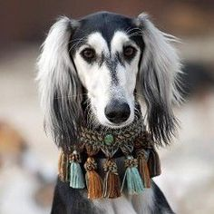 Aruby-Sighthoundshop - Collar and Saluki