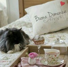 7 buona domenica ♡ Happy Weekend, Happy Day, Good Morning, Throw Pillows, Cat Photography, Night, Sink Tops, Nighty Night, Buen Dia