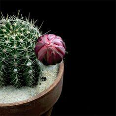 Quente e gostoso: VERMELHO...www.decorecomgigi.com