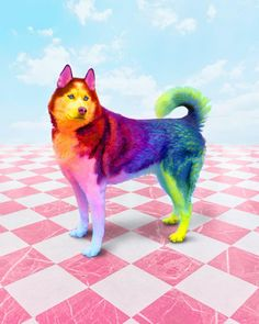 Ramzy Masri is a talented Brooklyn-based graphic designer who uses rainbow colors as a major inspiration for his artwork. Baby Animals Super Cute, Pretty Animals, Colorful Animals, Cute Little Animals, Cute Funny Animals, Animals Beautiful, Baby Animals Pictures, Cute Animal Pictures, Animals And Pets