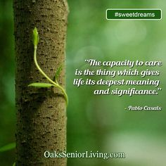 """#sweetdreams: """"The capacity to care is the thing which gives life its deepest meaning and significance.""""- Pablo Casals  ~OaksSeniorLiving.com #quote #elderly #seniors #quotes #caring Deep Meaning, Senior Living, Sweet Dreams, Meant To Be, Sayings, Quotes, Atlanta, Life, Quotations"""