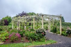 This is the wisteria pergola at Kaydale Gardens in Tasmania. Must look amazing when in full flower.
