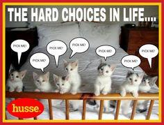Cats, husse haaglanden, husse, dogs