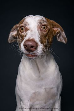 """Elke Vogelsang 